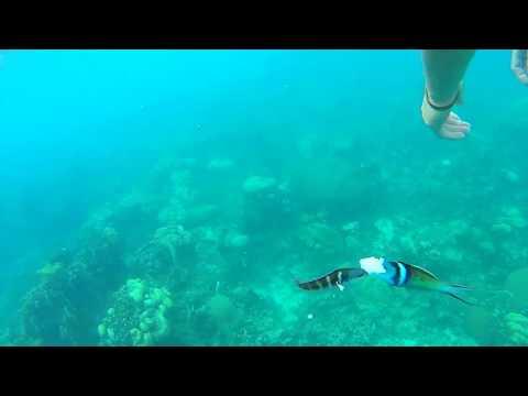 Snorkelling at Jamaica's Marine Park
