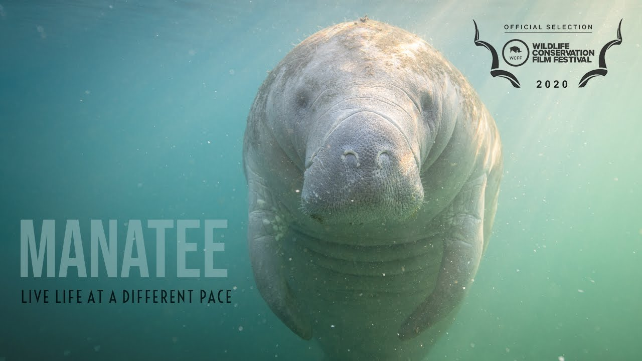 Manatee 360 - Trailer