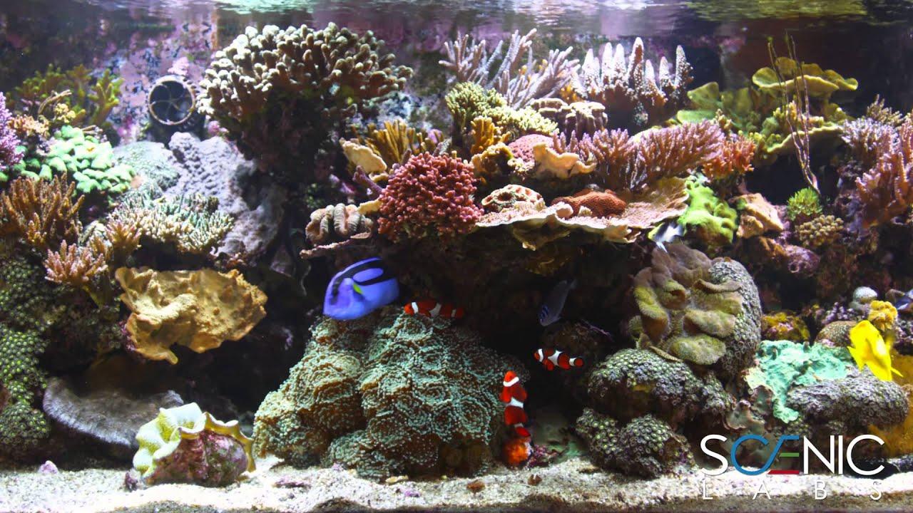 Fish Tank 3d Wallpaper Scenic Labs Coral Reef Aquarium In 4k Youtube