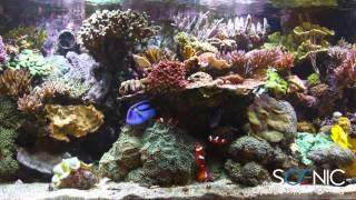 Scenic Labs Coral Reef Aquarium in 4K