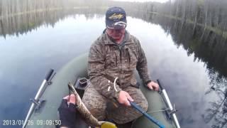 june 2016  Рыбалка, Карелия, Мелкое озеро(Один щуренок погиб, заглотил по самые жабры. Очень жалко. Озеро мелкое, только окунь и карандаши. Забрали..., 2016-07-13T12:54:44.000Z)