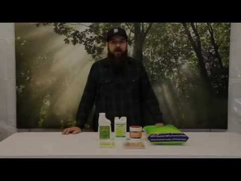 How to Kill Fungus Gnats in the Grow Room