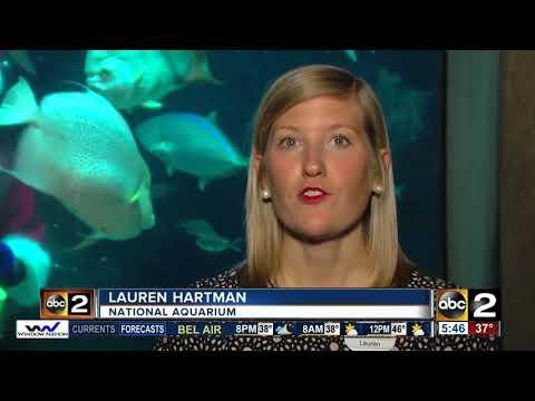 Santa scuba dives in the atlantic coral reef