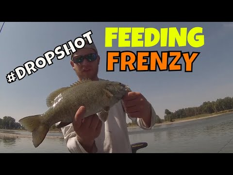 Montana Bass Fishing - Drop shot tips- Yellowstone River 2017