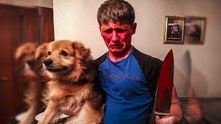 фаина питбуль, отрезал собаке лапу, и чем кормлю собак