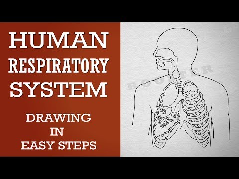 How To Draw Human Respiratory System In Easy Steps 10th Biology