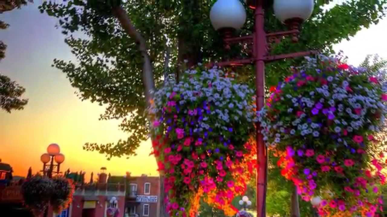 how to make hanging baskets look full