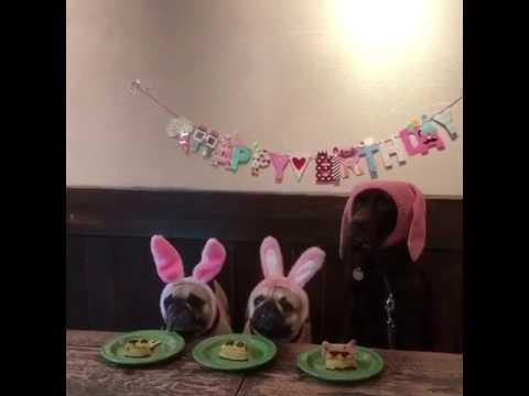 Hunde Geburtstag Youtube