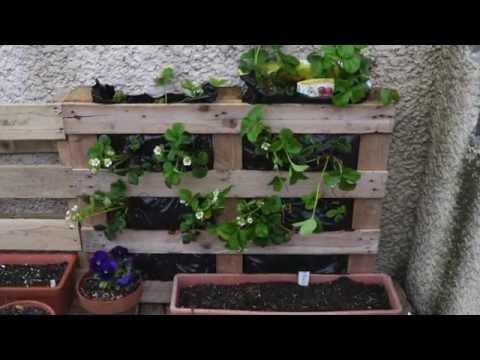 Huerto vertical en palets tarimas ecodaisy youtube for Como hacer un jardin vertical con palets