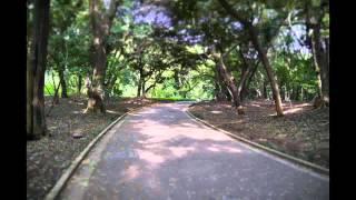 lumix gf5 と初めてのお散歩 新宿御苑