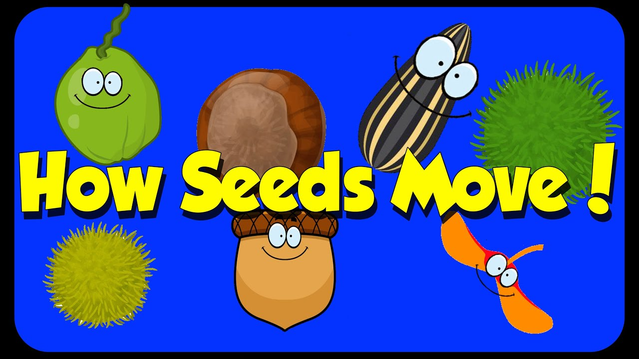 Teaching Tree Diagram The Book Thief Plot Seed Song - How Seeds Move Dispersal Youtube