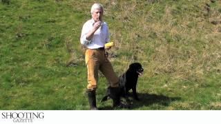 Gundog Training - Seen Retrieve