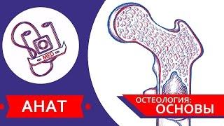 MED || Анат/Остеология №1 || Основы