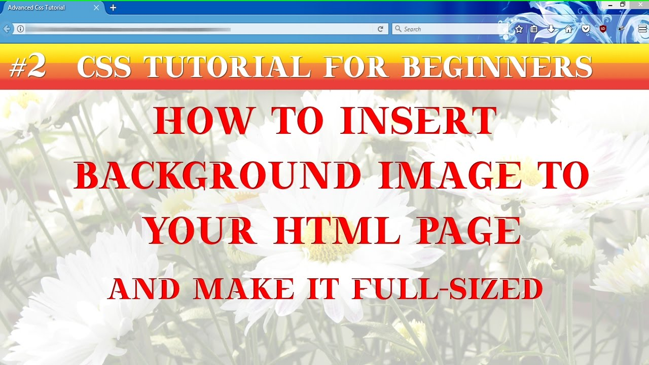 Background image 2 images css - Css Tutorials For Beginners How To Insert Background Images In Html And Make It Full Sized Part 2