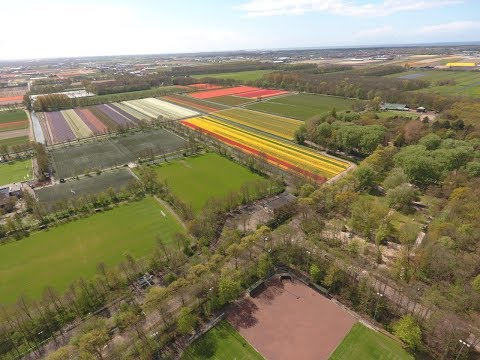 Drone flies over Holland - Tulips Fields