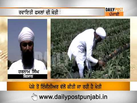 Ludhiana: Strawberry Farming in Punjab ||Daily Post Punjabi||