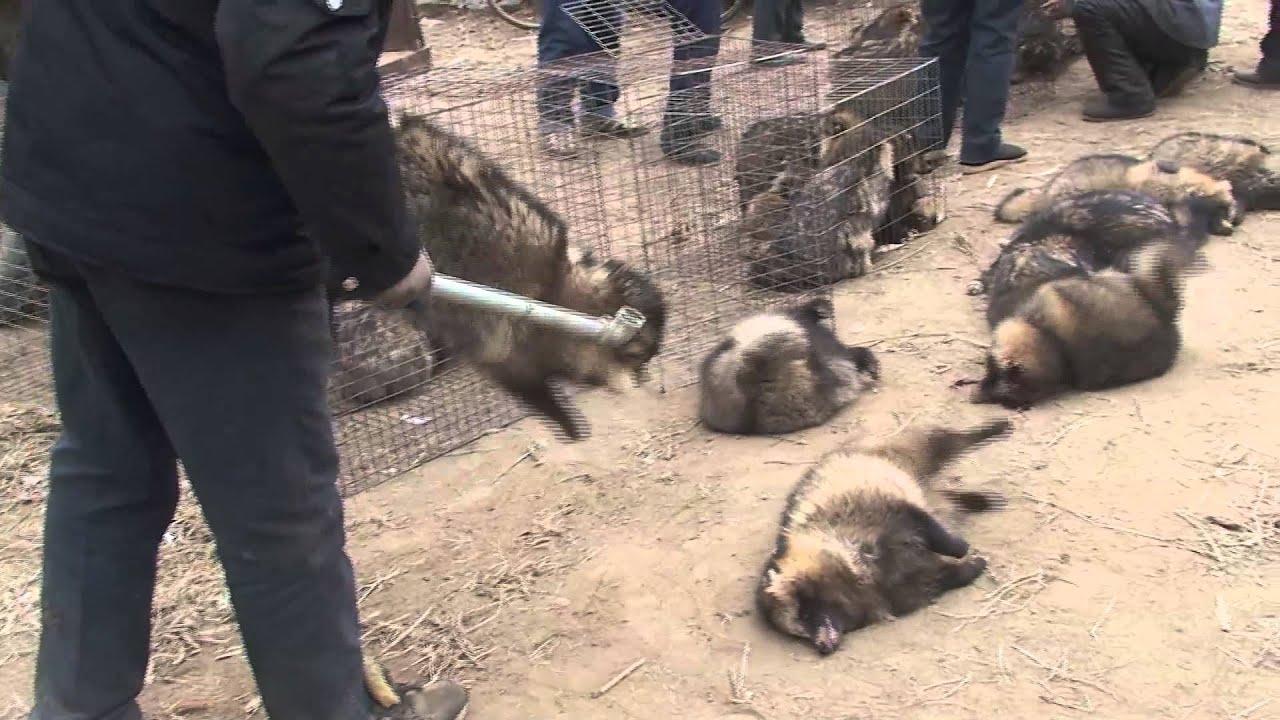 China's Cruel Fur Industry