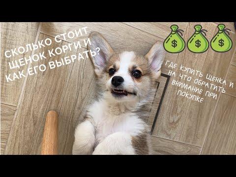 Вопрос: Как назвать собаку породы корги?