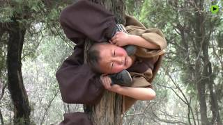 Shaolin kids: Tiny monks show off their amazing Kung Fu moves!