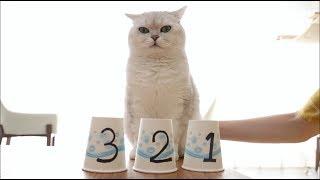 女主人和猫咪玩智力游戏-猫-明明可以靠脸吃饭-要什么智商