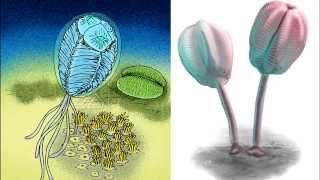 Развитие жизни на Земле (The Evolution of Life) - Вентагирус (Ventagirus chistyakovi)