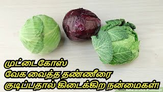 Benefits Of Cabbage Water in Tamil | Muttaikose Payangal | Healthy Life - Tamil.