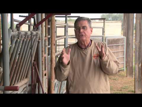 Cow-Calf Corner: Size Of Cows For Breeding Season (10/10/15)