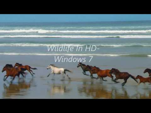 Wildlife In HD (Windows 7 Sample Video)