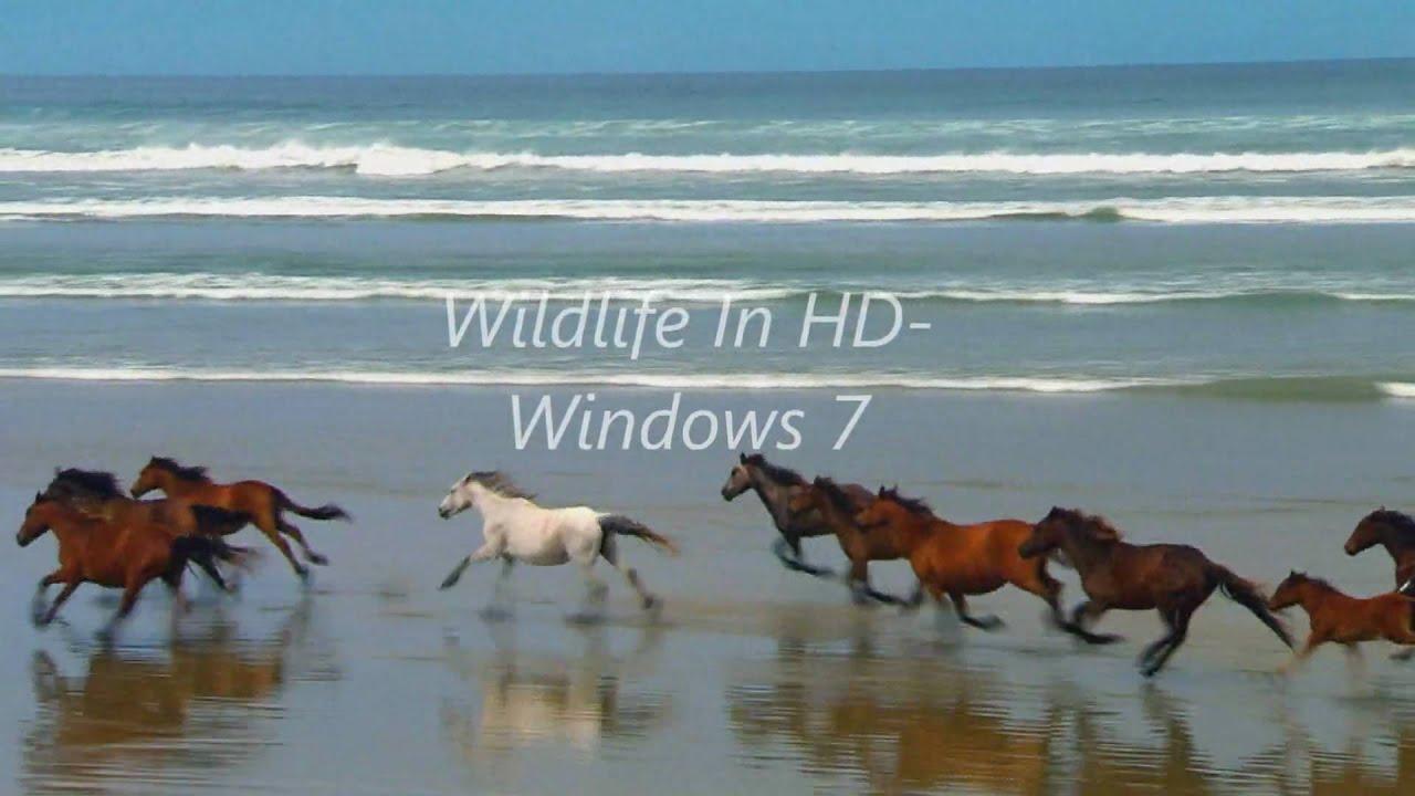 Wildlife In Hd Windows 7 Sample Video - Youtube-3694