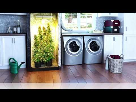 What Equipment Do You Really Need To Grow Marijuana Indoors?