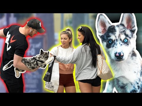 PICKING UP GIRLS USING MY NEW PUPPY!