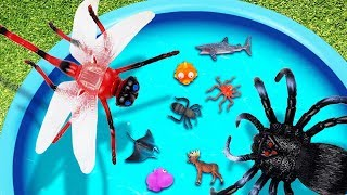 Learn English with Wild Animals and Sea Animals & Animals for Kids & Blue Pool