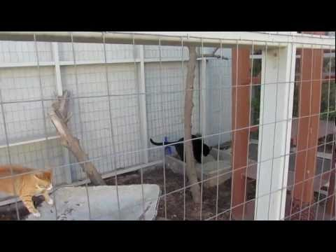 Our Cat Enclosure and Cat Run (DIY Pet Project)