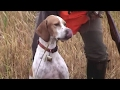 Quail hunting with pointing dogs - Ultimate Hunting