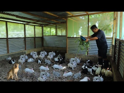 RABBIT FARMING│ Everything you need to know about RABBIT RAI