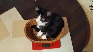 Алисе 3 месяца. Сколько же она весит?