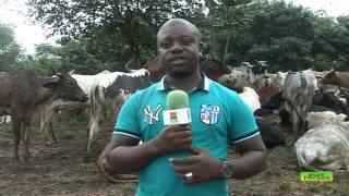 BRAVE PAYSAN / L'élévage en Côte d'Ivoire : L'avis des acteurs du secteur