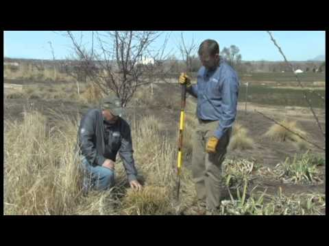 How to care for ornamental grasses youtube how to care for ornamental grasses workwithnaturefo