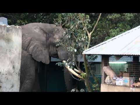 Elephants invades campsite (Ngorongoro Crater, Tanzania)