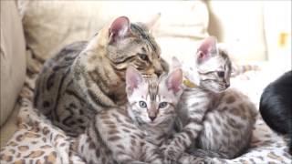 Lelu's babies at 9 weeks