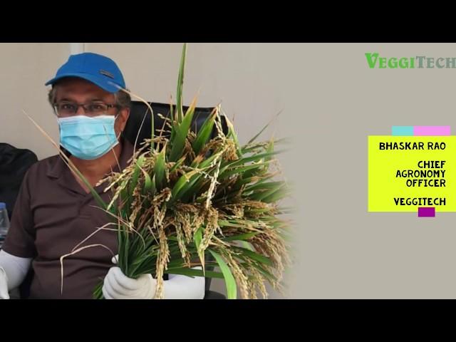 Paddy Trials in Hydroponics DWC