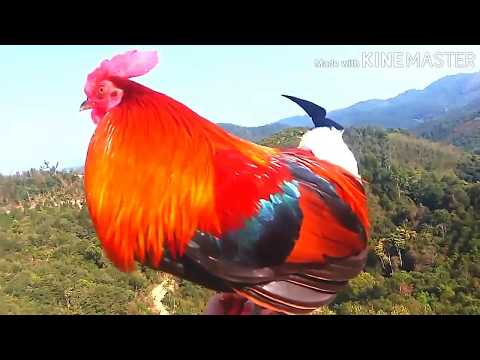 Hunting The Most Beautiful Cock