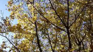 Autumn Leaves - sung by Nat King Cole - video by PKLaf