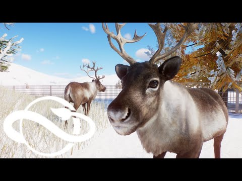 In depth look at the new Reindeer (Planet Zoo: Arctic Pack animal overview part #4)!! |