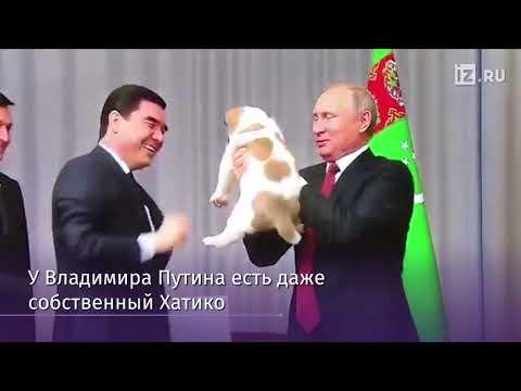Вопрос: Овчарку Пашу кто подарил Путину Сколько всего собак подарили Путину?
