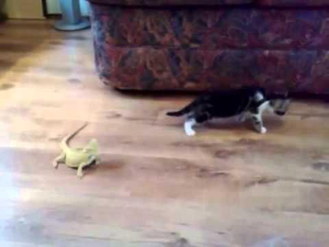 Kitten scared of Lizards...Funny - YouTube