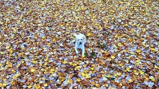 Mabel's First Leaf Pile!