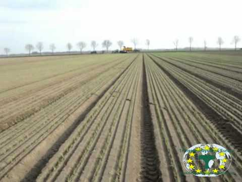 12 rower planting union by Transplant Systems Europe