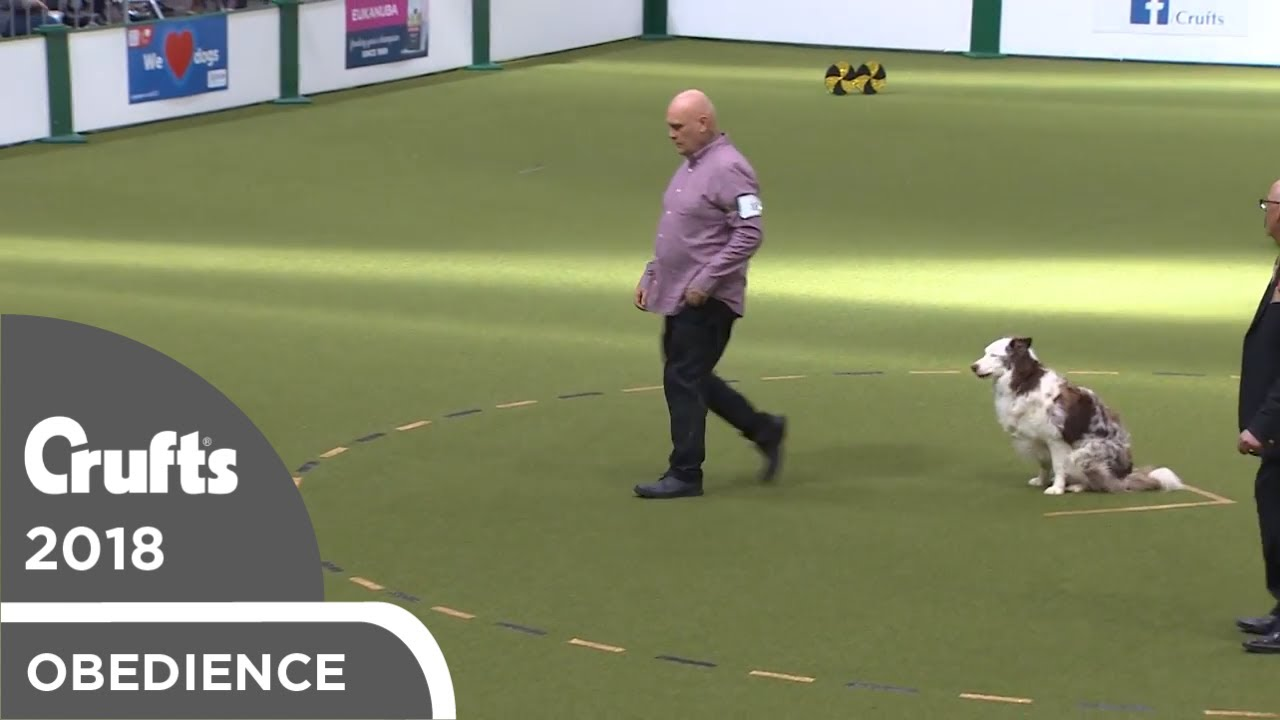 Obedience - Dog Championship - Part 15   Crufts 2018