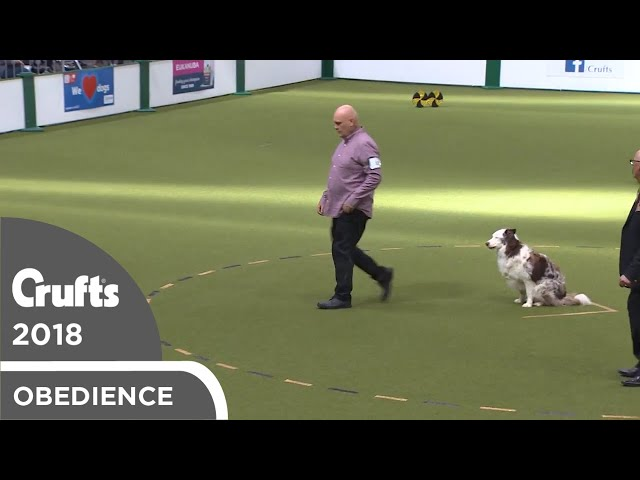 Obedience - Dog Championship - Part 15 | Crufts 2018